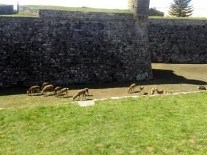 citadel jaca